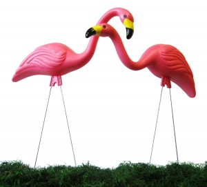 Pink Flamingo Fundraiser