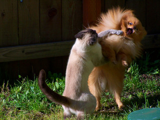 Image courtesy of A Ninja Monkey, Flickr